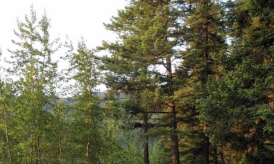 Flathead River Camp Spot